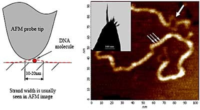 Short poly(dG)–poly(dC) DNA fragments deposited on modified HOPG