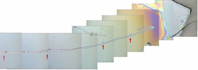Optical images of the scratch (scratch is indicated by red arrows).