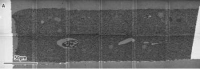 The 6 × 2 mosaic image of ultramicrotome cross section of rat hippocampus recorded with STEM detector.