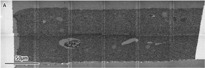 (A) Low magnification overview image of a single mosaic site consisting of 6 x 2 tiles, each 49 µm x 49 µm, acquired using the GEMINI® STEM detection system in a SUPRA® FE-SEM. Each image tile was acquired at 2 nm per pixel.