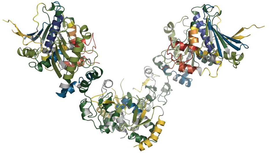 Secondary Structure Representation of the crystal structure of E.coli HtpG color coded according to H/D exchange at 30s