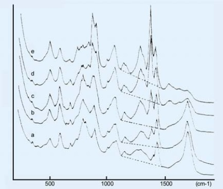 Raman spectra of poly (acrylic acid) at different degrees of neutralization. Degree of neutralixation, a: (a) 0, (b) 0.2, (c) 0.4, (d) 0.8, (e) 1.0. 25% aqueous solution. The dashed lines indicate the backgrounds. (These spectra are reproduced from Koda. et.al, Raman Spectroscopic Studies on the Interaction Between Counterion and Polyion, Boiphysical Chem., 15, 65-72, 1982).