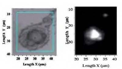 White light video image (left) contaminated surface.