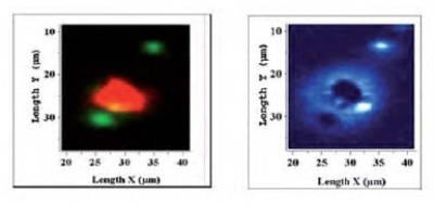 (left) Raman mapped image for the two active components, RDX (red), and PETN (green), and Raman mapped image for the inert binder (right).