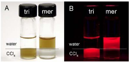 QDs coated with tri-n-octyl phosphine oxide (tri) and mercaptoacetic acid (mer) under ambient (A) and ultraviolet (B) illumination. The upper layer is water; the lower layer is CCl4.