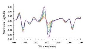 Second derivative spectra corresponding to the absorption spectra of Figure 4.