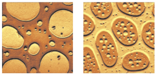 Stiffness maps of the thin film of SBR-PMMA (left) and SBS-PMMA (right).