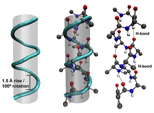 α-helical structures.
