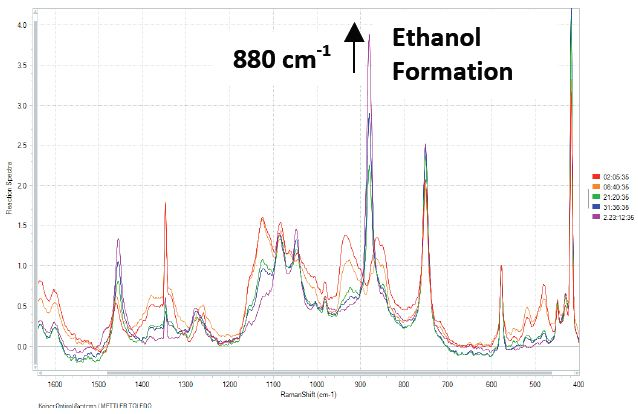 Raman spectra of fermentation process