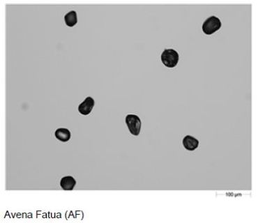 Example field of view images of the three dispersed pollen samples taken with the 10X objective.