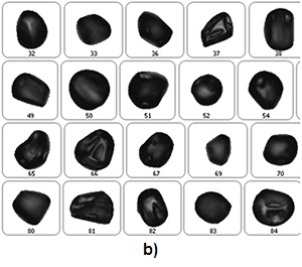 a) Example particle images for PJ pollen. b) Example particle images for AF pollen. c) Example particle images of TO and CL pollen.