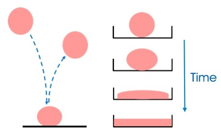 The filled polydimethylsiloxane (PDMS) behaves predominantly elastic if deformed for a short period of time and predominantly viscous if subjected to gravity over a long time period.