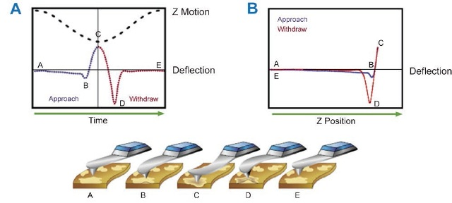 """In PeakForce Tapping Mode the AFM probe is modulated at low frequency (1-2 kHz). (A) As the probe is brought into contact with the surface, the feedback signal is the maximum or """"peak"""" force applied to the surface. (B) If the motion of the probe is considered in terms of Z position, one is essentially performing a force curve at every position of the sample surface."""