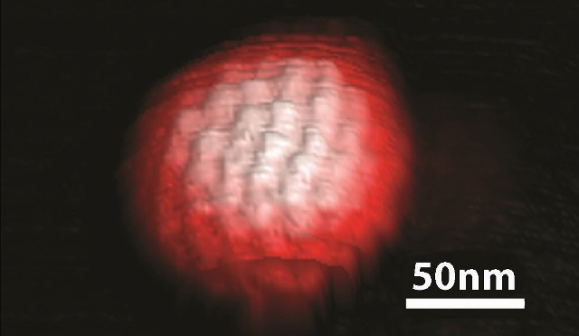 3D topography image of a single herpes simplex virus obtained in ScanAsyst mode in buffer solution. The spatial arrangement of the individual protein molecules on the surface of the virus capsid, also known as the capsomere, is clearly visible in the AFM image (ScanAsyst Fluid+ probe, k~0.7N/m).