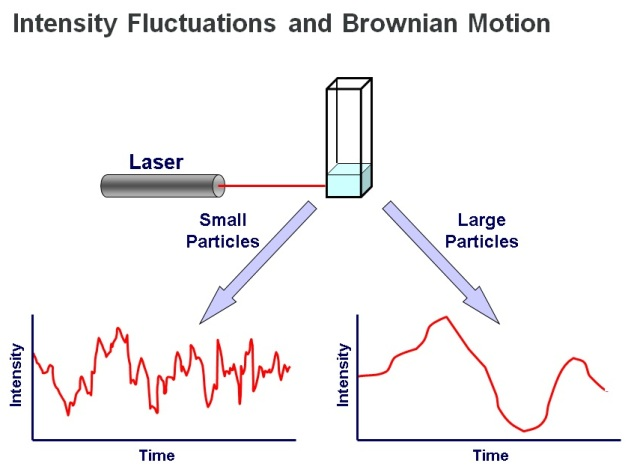 DLS measurements determine particle size from the pattern of intensity fluctuations in scattered light.