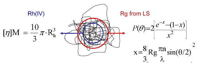 Rh (IV) is a different size metric to Rg measured by MALS.