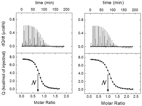 Effect of macromolecule concentration uncertainty on the binding parameters estimation from a calorimetric titration. (Left) A fractional value of N (0.72 ± 0.01) is obtained from the data analysis using the nominal concentrations (230 pM for the ligand in the syringe, and 29 pM for the macromolecule in the cell). Because in this case the ligand concentration is considered to be fairly accurate, the fractional value indicates that the protein concentration has been estimated in excess with a 28% error. Employing a protein concentration normalized according to N (21 µM), the expected non- fractional 1:1 stoichiometry (N ≈ 1) is recovered (Right). Because only the cell concentration has been modified, the association constant and the binding enthalpy remain unaltered. If the syringe concentration is modified, both parameters will also change.
