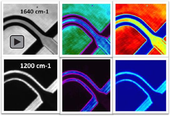 Discrete frequency images of H2O and D2O flows within a microfluidic channel at characteristic absorbances. Video recorded at 1640 cm-1 displays the transmission image where H2O is black and D2O is white.