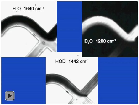 Discrete frequency video of H2O and D2O interface with proton deuteron exchange zone clearly observed at 1442 cm-1