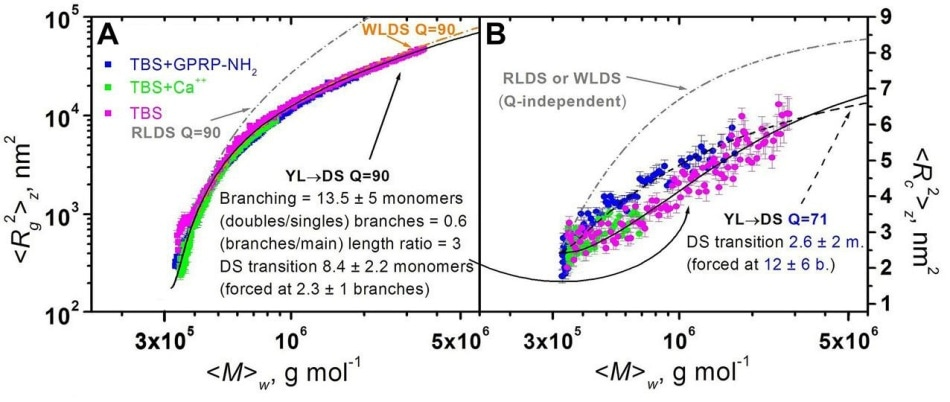 Plots of mean square radius vs. weight-average molar mass (A) and of mean square thickness vs. weight-average molar mass (B) for FG polymerizations under different conditions. Superimposed are model curves generated for some polymerization models (see text).