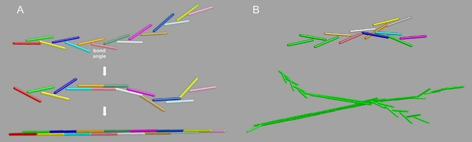 """The """"Y-ladder to double-stranded"""" (YL → DS) model for fibrin polymerization. Panel A, the single-binding to full DS transition. Panel B, top: branched structures generation by off-axis binding of a growing chain to a still available A knob; bottom: a typical resulting branched fibril, with the growing ends still in the YL configuration."""