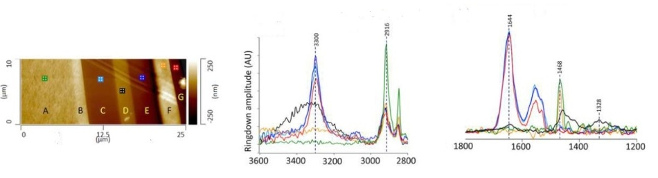 (a). AFM height image showing cross sectioned multilayer film. AFM-IR spectra at 2800-3600 cm-1 (b) and 1200-1800 cm-1 (c); spectra collected from layers C, E, and G are consistent with a polyamide. The IR spectrum recorded from layer D, which can be considered as the barrier layer in the film, is consistent with polyethylene-co-(vinyl alcohol) (EVOH).