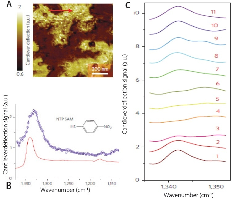 (a) AFM deflection image showing SAM's of NTP on gold substrate. (b) Comparison of AFM-IR spectrum (blue) and ATR spectrum (red) of NTP SAM's. (c) Array of AFM-IR spectra collected across red line shown in (a) demonstrating spatial resolutions of ~20 nm.