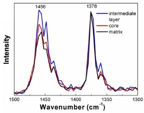 AFM-IR spectra acquired from each region within the HIPP. Data has been normalized to 1378 cm-1.