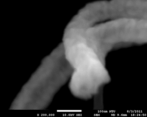 SEM Image Affected by AC Fields, With SC System