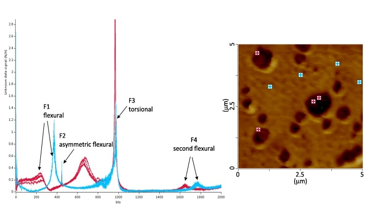 LCR spectra (a) and AFM height image (b) showing spectra of individual points on the PP matrix in blue and elastomer domains in red.
