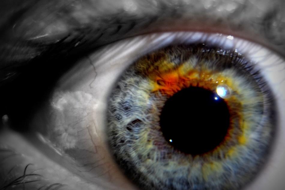 Human Eye Perceive Light