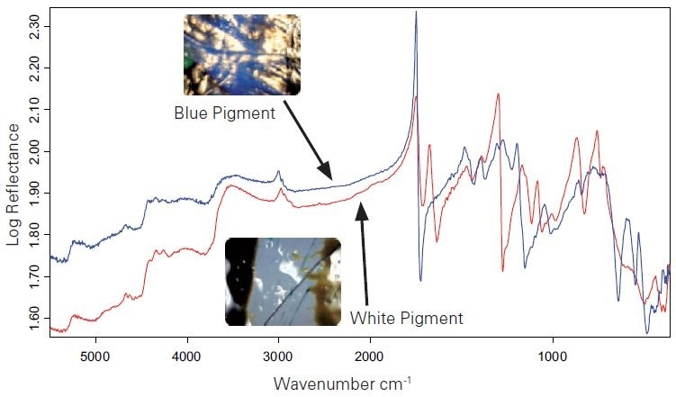 Raw reflection spectra of two different measuring points with two different pigments (blue pigment = blue spectrum, white pigment = red spectrum).