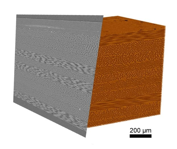 A small sample of fiber composite scanned at high resolution with ZEISS Xradia Context microCT. This composite contains both carbon and glass fibers in a polymer matrix, which are resolved with high contrast.