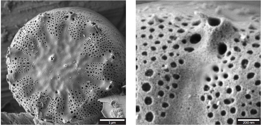 An overview of a diatom's cell wall on the left and detail of the surface on the right image. The structures were imaged at 1 keV for enhanced surface sensitivity with the E-T detector