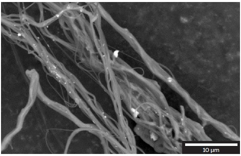 Silver nanoparticles distribution on the surface of the polyamide nanofibers