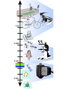 microscopy scale