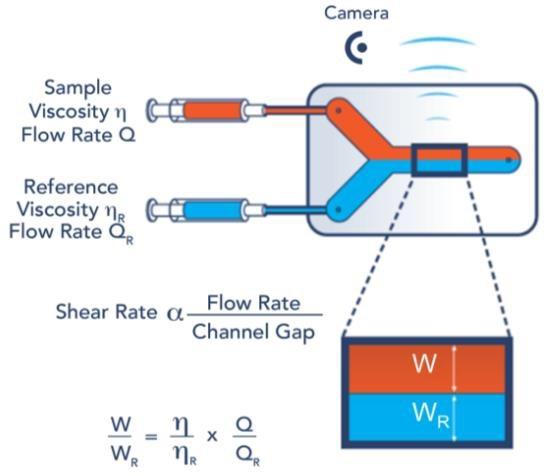 FLUIDICAM Rheo measuring principle