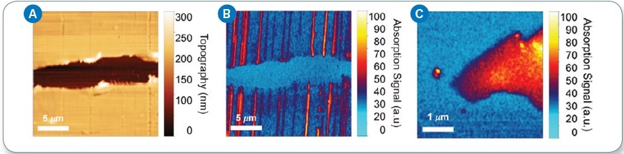 (a) AFM topography imaging of CNTs deposited on polystyrene substrate; (b) IR chemical mapping image at 4000 cm-1 showing absorption by CNTs; (c) IR chemical mapping image of monolayer graphene captured at 4000 cm-1.