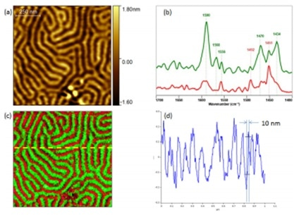 Chemical characterization of PS-P2VP block co-polymer sample by Tapping AFM-IR. (a) Tapping AFM height image. (b) Tapping AFM-IR spectra clearly identifying each chemical component. (c) Tapping AFM-IR overlay image highlighting both components (PS@ 1492 and P2VP@ 1588). (d) Profile cross-section highlighting the achievable spatial resolution, 10 nm. Sample courtesy of Dr Gilles Pecastaings and Antoine Segolene, University of Bordeaux, France.