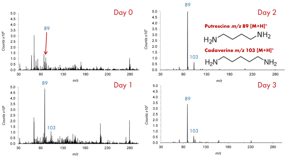 Mass spectra of the daily analysis of the headspace above the meat sample at ambient temperature.