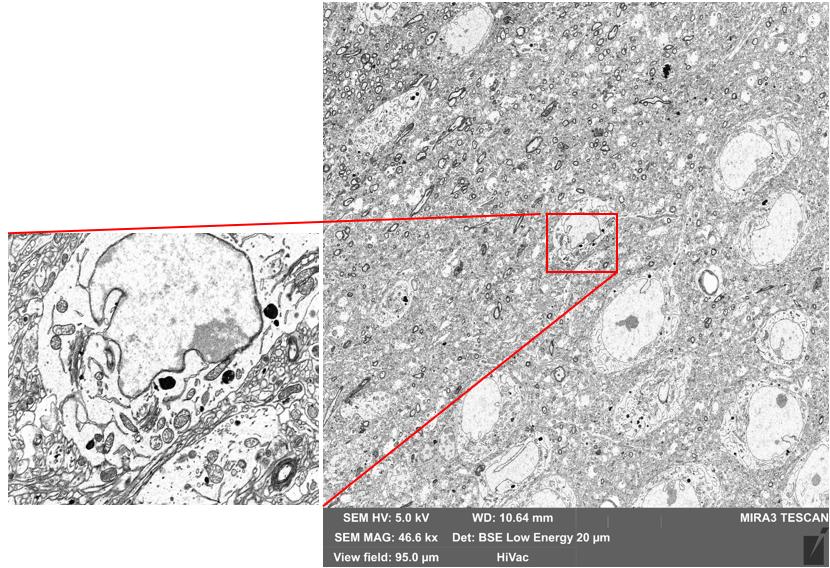 16k x 16k pixel image, 1.0us/pixel, 6nm pixels