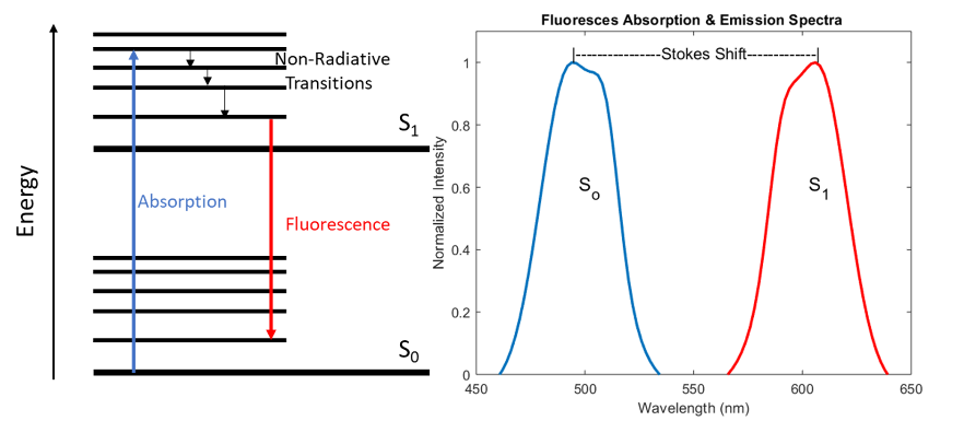 Example Jablonski diagram and the fluoresces absorption/emission spectra of a typical fluorescent molecule.