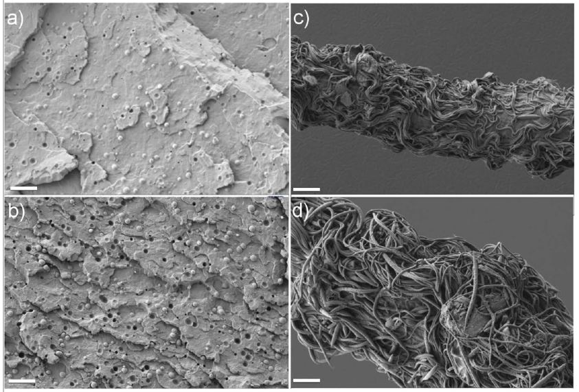SEM images. (a) and (b): Fractured surfaces of as-extruded samples with 6 wt% and 10 wt% of PTT, respectively. (c) and (d): Etched surfaces of one spun blend filament containing 6 wt% and 10 wt% of PTT, respectively. The scale bar is 10 µm.