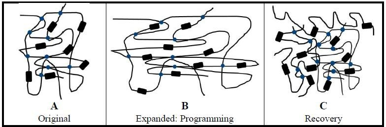 Transition and elastic components of HSPs. Using heat shrinkable tubing as an example, amorphous polymer chains (black lines) provide the elastic component for the expanded tubing. Elastic component energy is supported by crosslinking of polymer chains (blue dots). Crystallites (black rectangles) form the reversible transition component. (A) Unexpanded tubing shows only crosslinking. (B) Programming: The tubing is heated to just above its melt temperature and expanded. Held in its expanded shape, the tubing is then quickly cooled to lock the stretched polymer chains in place storing elastic energy. (C) Recovery: With the application of heat to the cooled and expanded tubing, the stretched amorphous chains are freed by melting and recover their original (unexpanded) permanent shape. In the recovered state, the polymer chains are more disordered and compact.