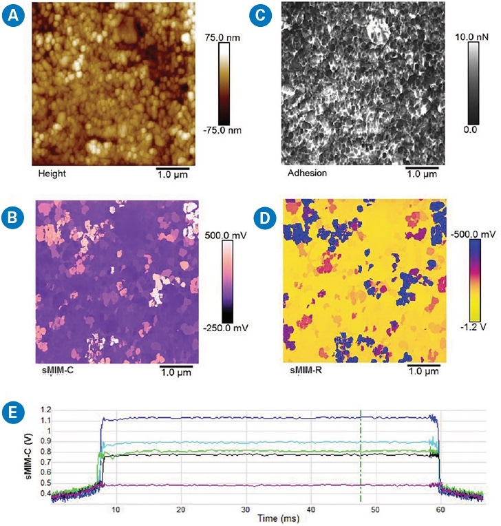 DCUBE-sMIM study of a ?-Fe2O3 sample: (a) surface topography, (b) quantitative adhesion map, (c) a slice of sMIM-C from the DCUBE results, and (d) a slice of sMIM-R from the DCUBE results.