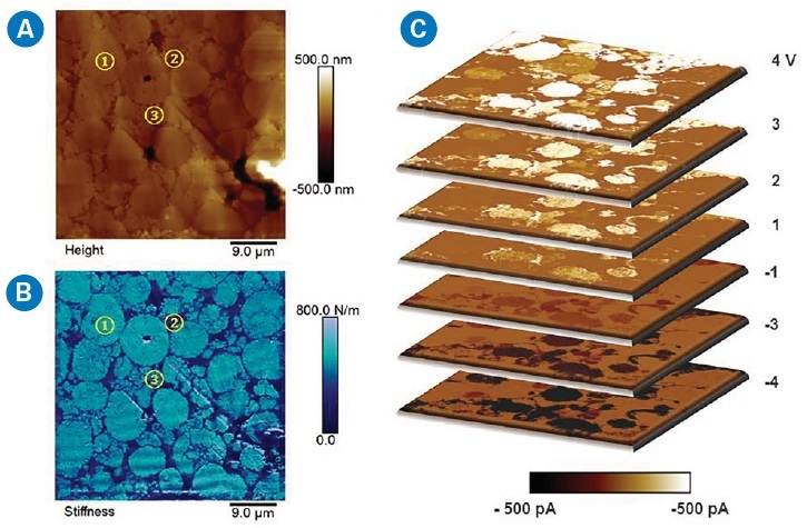 DCUBE-TUNA study of a battery cathode consisting of Li metal oxide (1), polymer binder (2), and conductive carbon nanoparticles (3): (a) surface topography, (b) quantitative surface stiffness differentiating different domains, and (c) a collection of TUNA current slices from the spectroscopic mapping at selected sample voltages. The scanning area is 45 x 45 µm2.