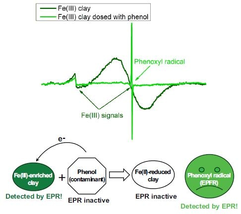 Free radicals in Fe(III)-enriched clay.