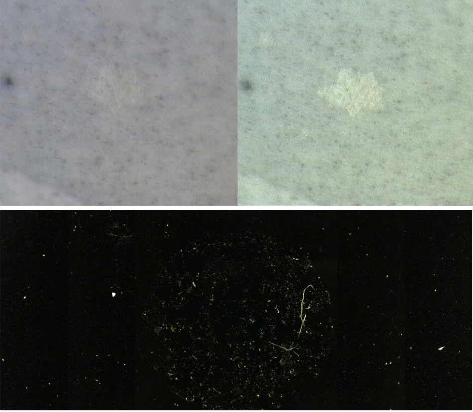 Visual enhancement options offered by the LUMOS. The contrast improving effect of crossed visual polarizers can clearly be seen (top), while in the darkfield image, the particles light up on a gold filter for easy localization (bottom).