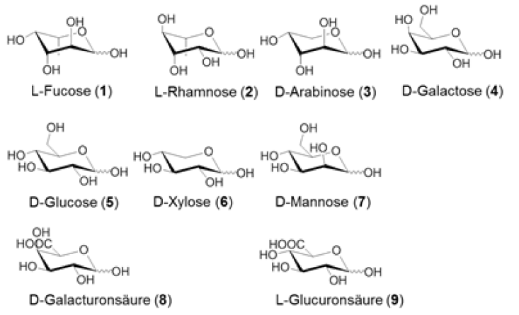 Pyranose structure of the seven wood monosaccharides and the two uronic acids