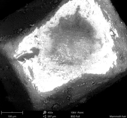 SEM image of sugar cube charging.